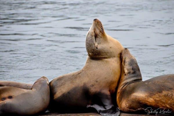 sea lions sleeping among my favorite animal photos